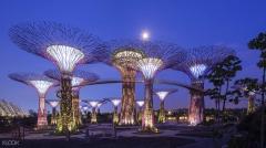 Phenomenal Singapore